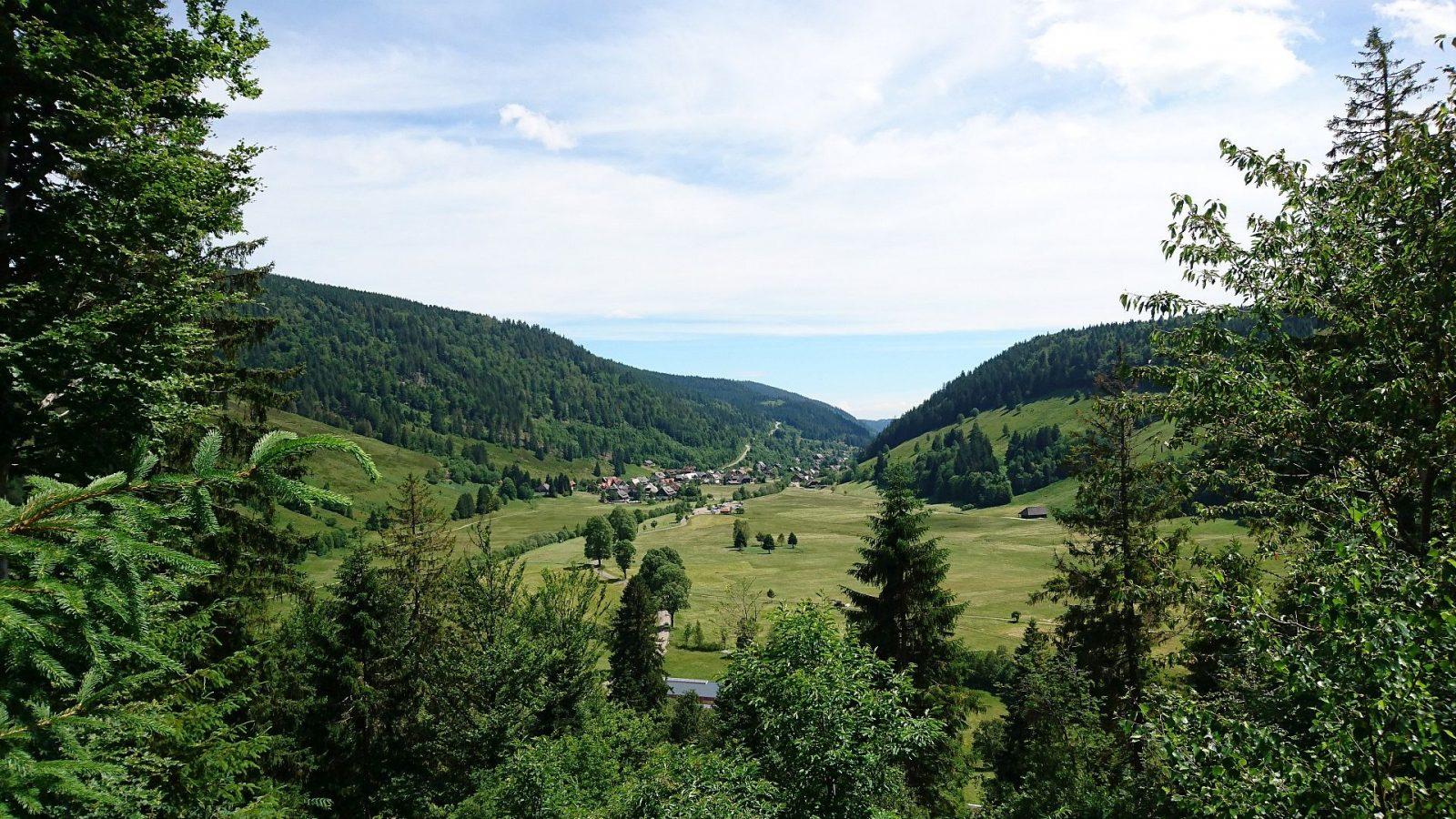 Der Schwarzwald bei Menzenschwand