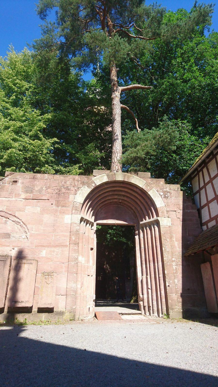 Eine ausgewachsene Kiefer direkt auf dem Portal der Paradies-Ruine in Bad Herrenalb