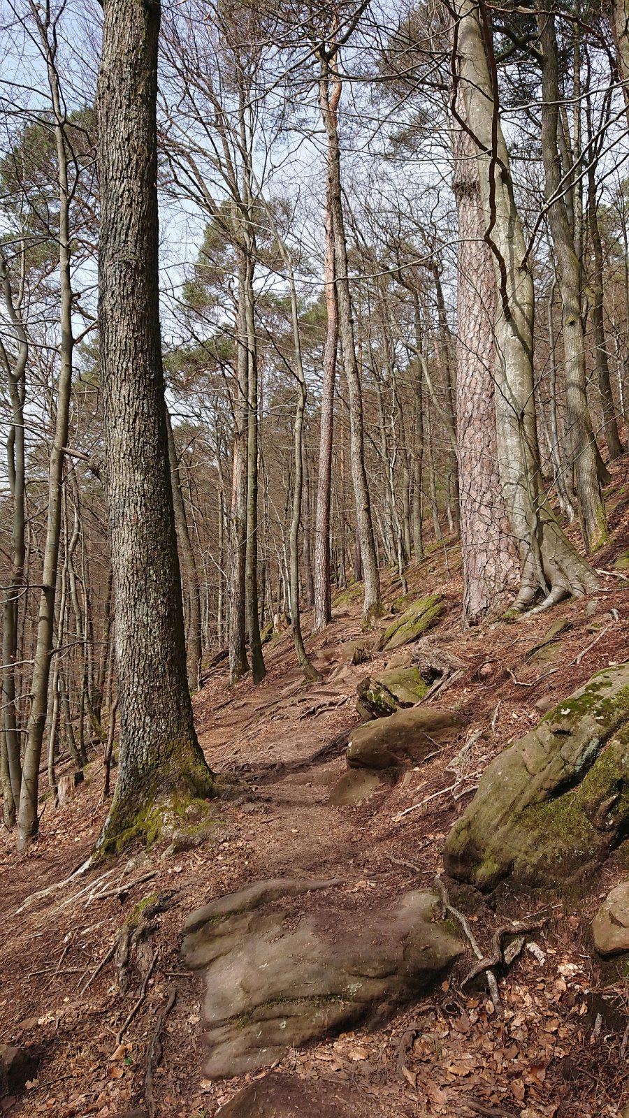 Der erste Abschnitt führt durch einen schönen Mischwald.